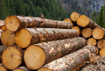 Holz – ein attraktives Investment?